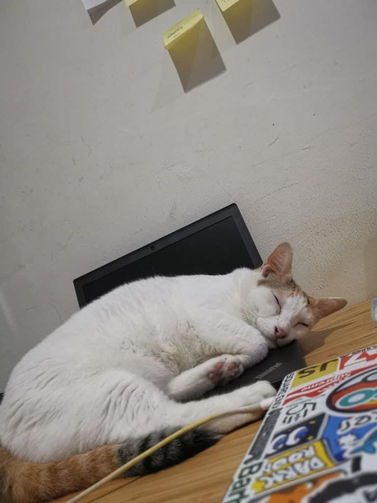 Ruby love to sleep in laptops